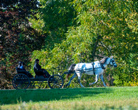 Horse_and_Buggy_DSC1995