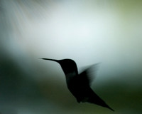 Hummingbird_108_e-mail