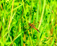 Dragon_Fly_3687
